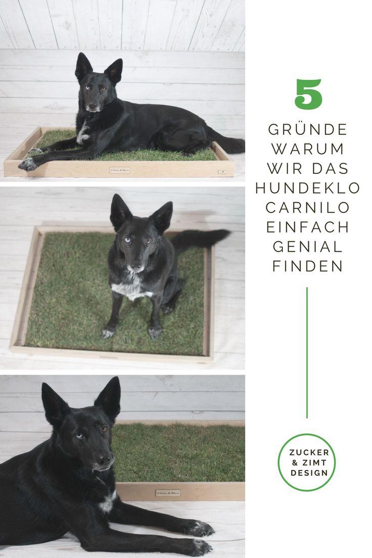 Was ist ein mobiles Hundeklo und warum braucht man das? Diese Fragen beantwort ich euch auf meinem Blog! https://zuckerundzimtdesign.com/2017/03/21/5-gruende-warum-wir-das-hundeklo-carnilo-einfach-klasse-finden-im-test/