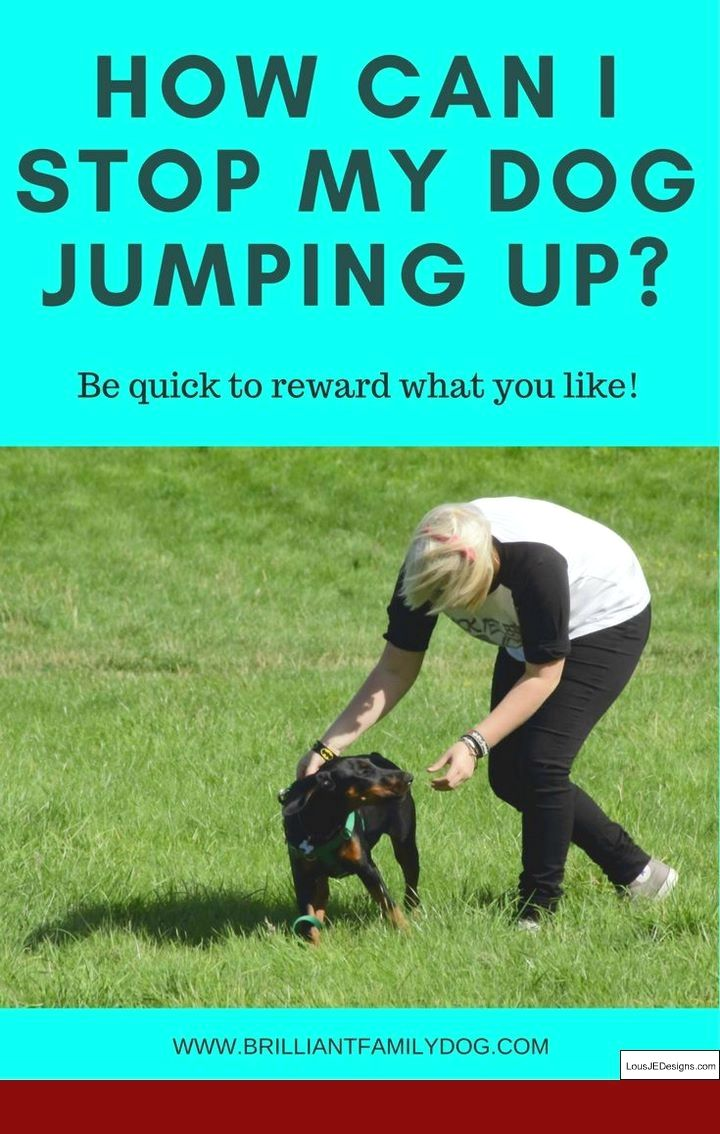How To Train Your Dog To Be Good Off Leash And Pics Of Ways To