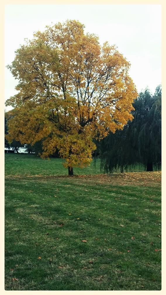 Harrow Campus # Autumn colours