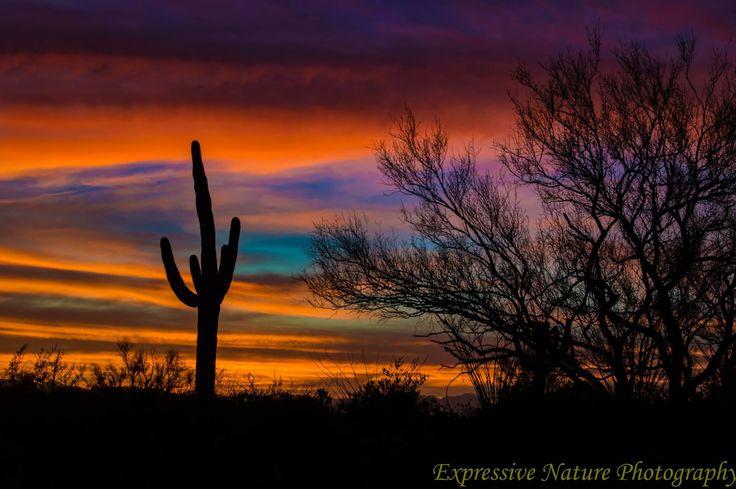 Desert Sunset in the Saguaro East park