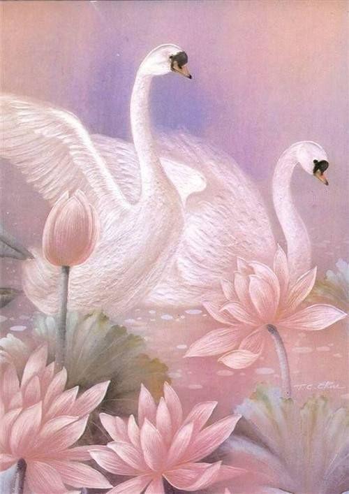 cisnes en color rosa | Juego de las aves | Pinterest)