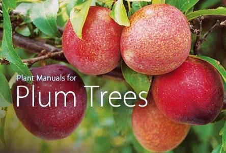 Plant Manuals for Plum Trees