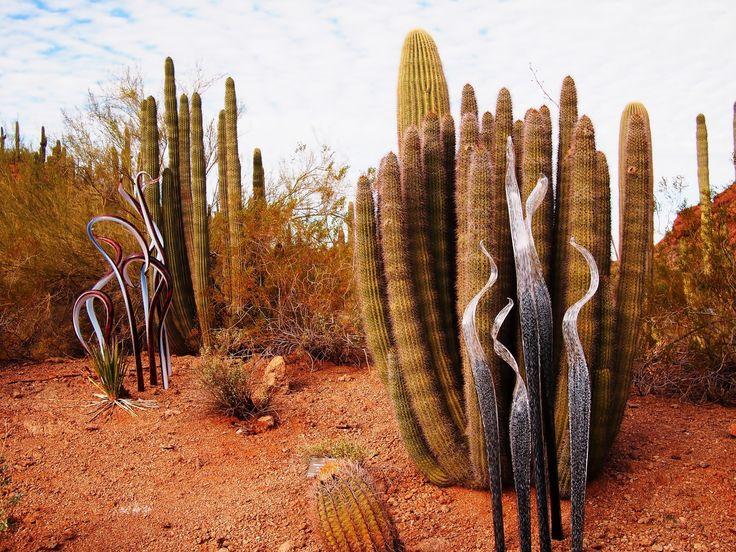 Kaktusy, Pustynia