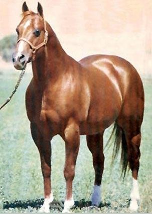 Quarter Horse Legend: Doc Bar