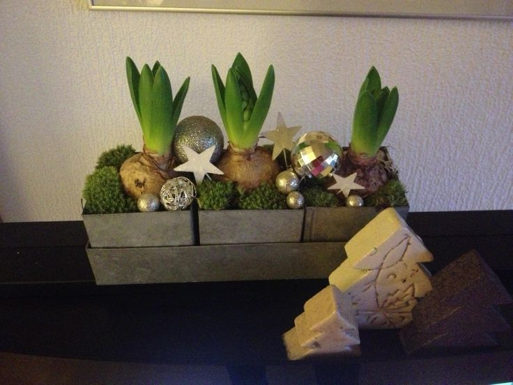 Simpel juledekoration med hyacinter - julen 2013 / Christmas decoration with hyacinths - Christmas 2013