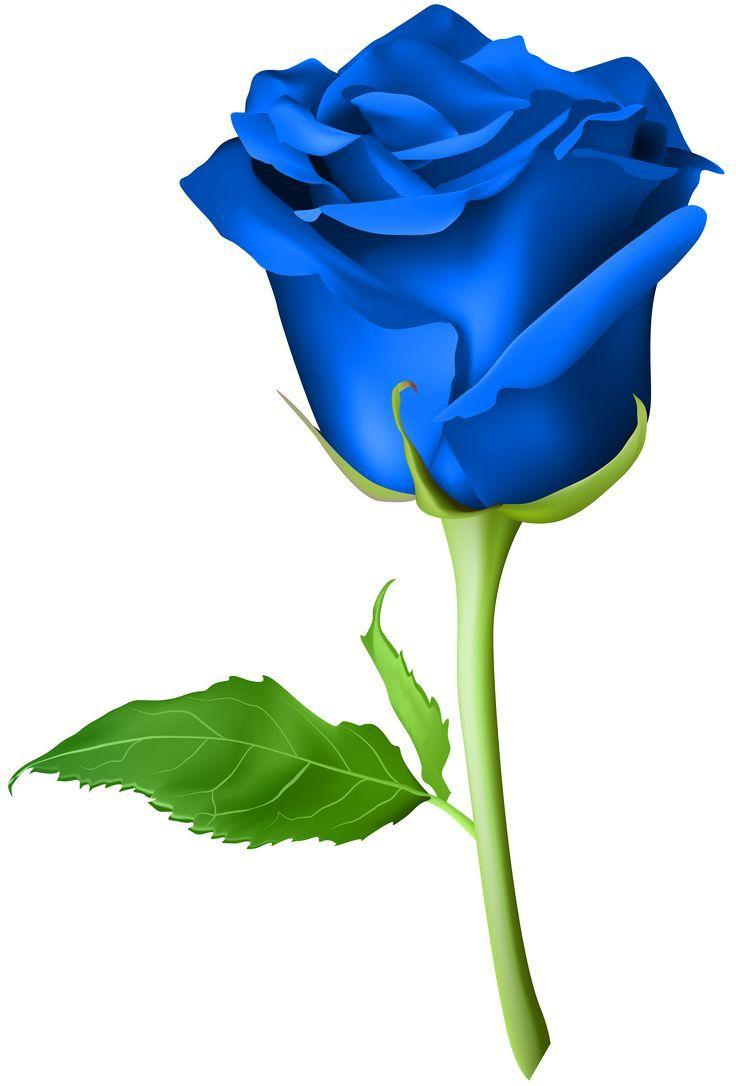 Pin By Jumrus Jakeepaibool On ورود Rose Flower Png Flower Drawing Blue Rose Tattoos