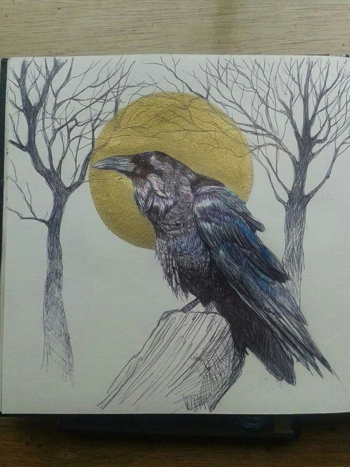 Raven drawing with biro and gold ink