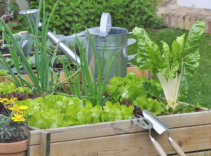 15 fast-growing veggies: These vegetables are ready to eat in weeks, it's the fast food that's good for you!