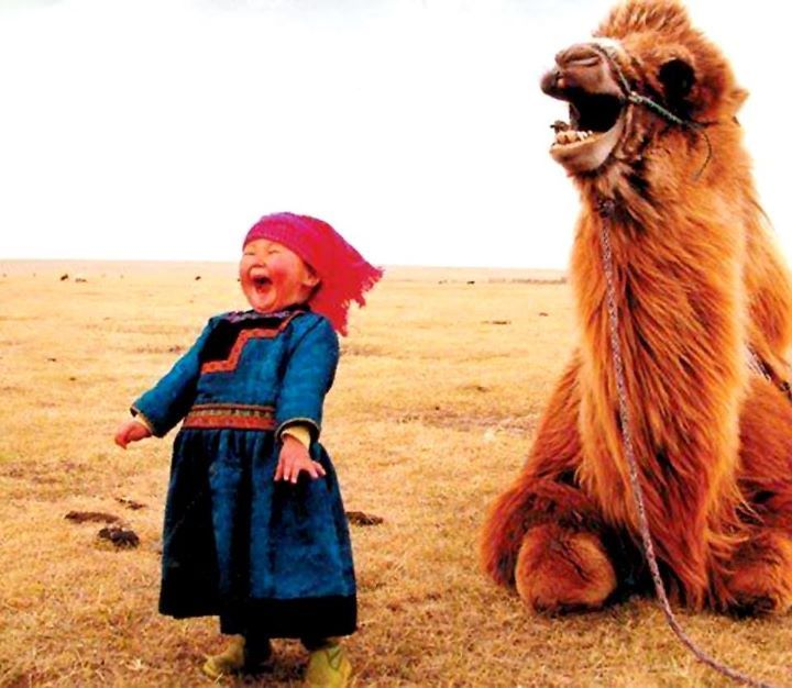 Laughing kids with camels are cute.