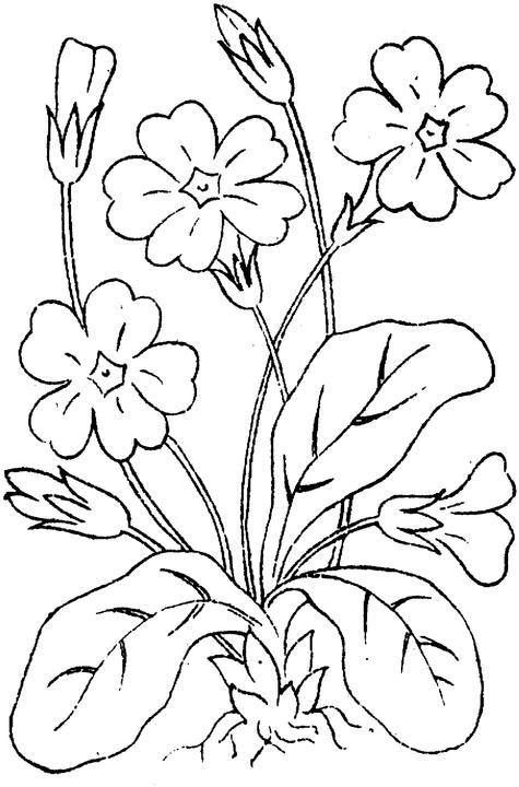 Flower Coloring Page Más