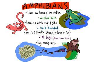Little Miss Glamour Goes To Kindergarten: reptiles & amphibians.