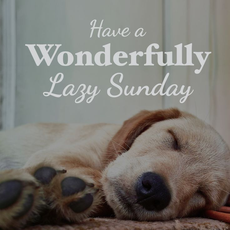 Happy Wonderful Lazy Sunday Quote, perfect for rainy days, dog and puppy lovers, life quote