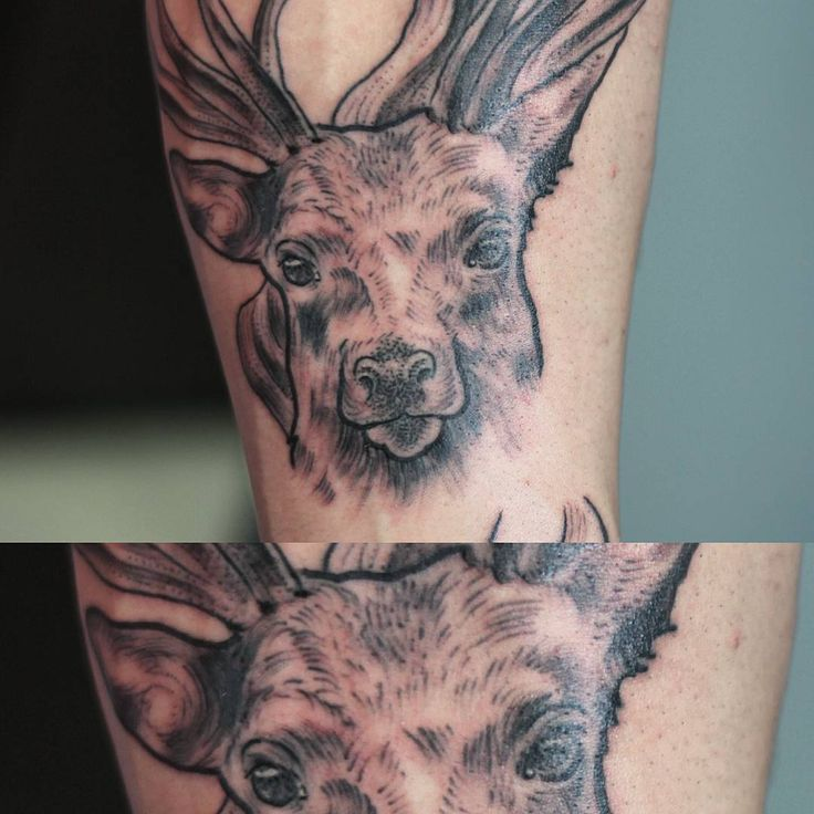Sergey Jaer #tattoo #rtats #jaer_x #ink #deer #black