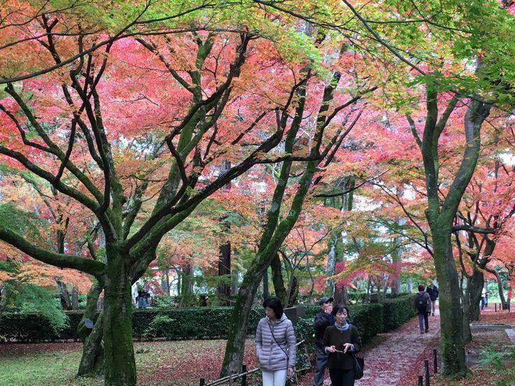 真如堂(Autumn leaves of Shinnyo-do)