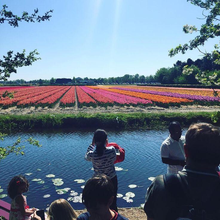 Тюльпановые поля. #keukenhof #кекенхоф #парк #голландия #sun #netherlands #nature #flowers #тюльпаны by anettanikol