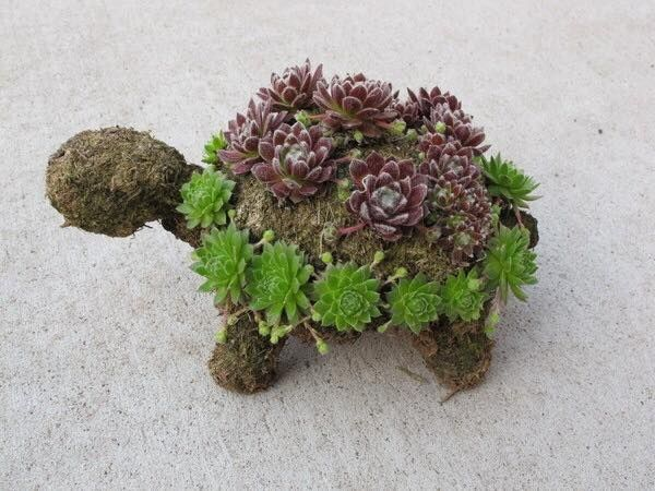 How To Make A Succulent Turtle Succulents Topiary Garden Little Gardens