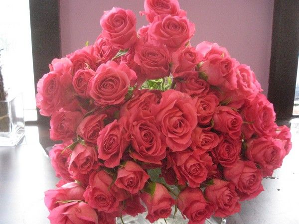 Roses In Garden: 1000+ Images About Pink/ Mauve Flowers On Pinterest