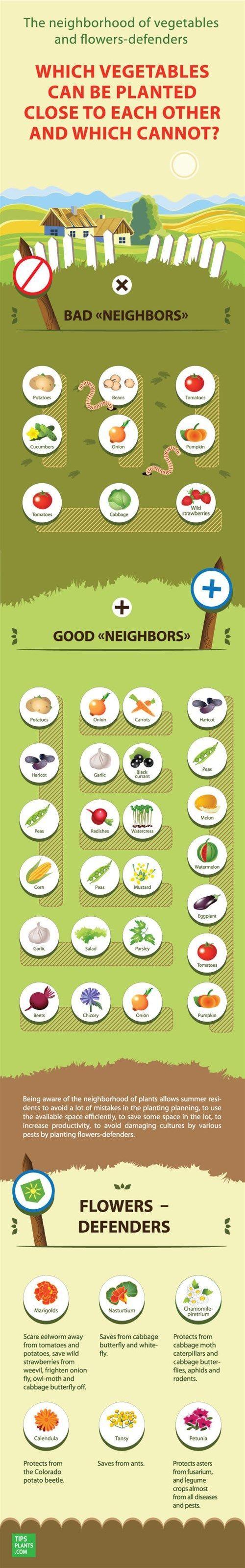 Companion Planting Infographic (1)