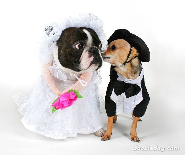 Best Animals Getting Married Images On Pinterest Cutest - Funny dog wedding photos will make your day