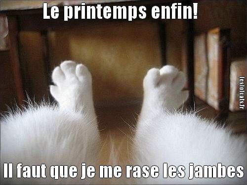 droles de jambes de un chat a rire                                                                                                                                                      Plus