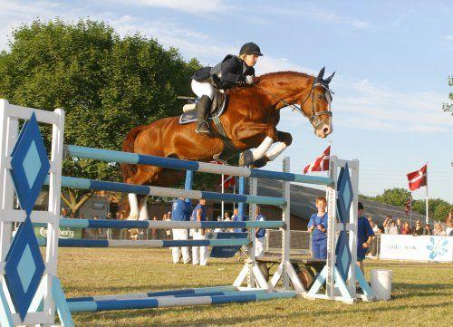 frederiksborg horse: frederiksborg horse