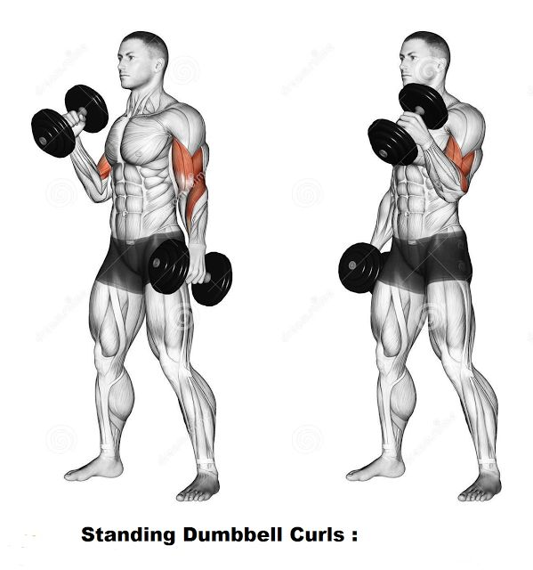 Dumbbell Exercises For Biceps