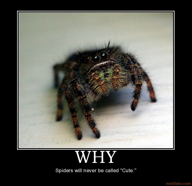 Giant scary spiders memes - photo#33