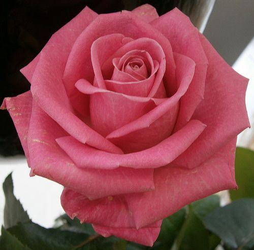 Pretty Flower 3358 best beautiful flowers i love images on pinterest | flowers