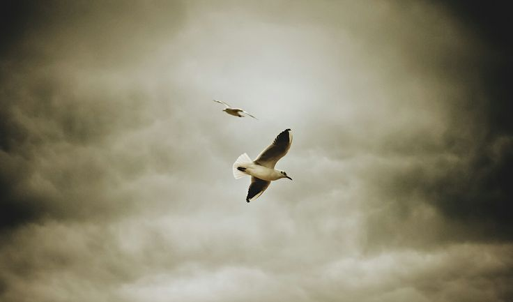 photography © Àlex Reig 2014 #photography #bird #art #seagulls