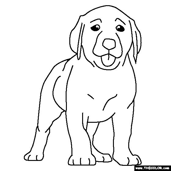 49 best images about projects to try on pinterest wayne for Coloring pages labrador