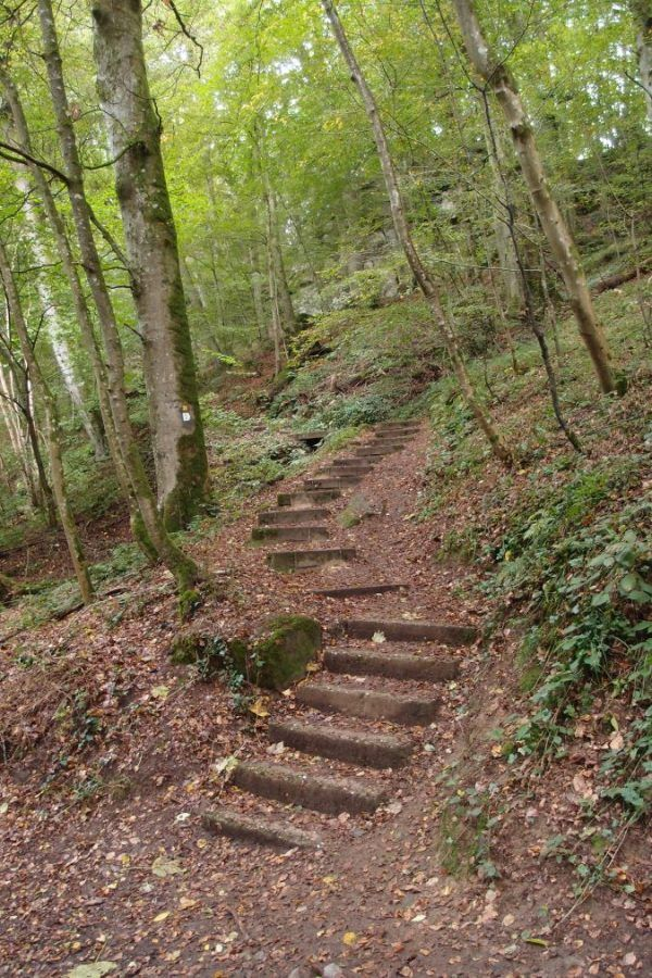 C5 #Mullerthal #trail #stairs #luxembourg #landscape