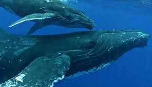 Image result for whales
