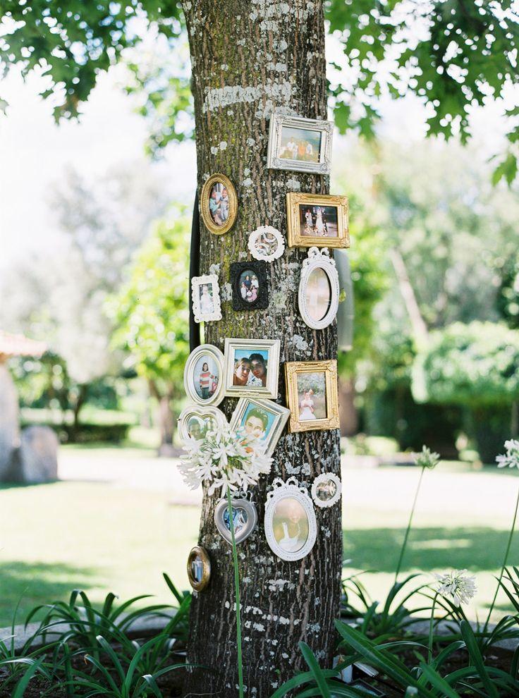 cadres photos arbres!