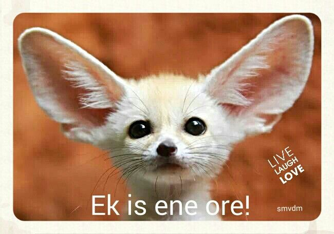Ek is ene ore!