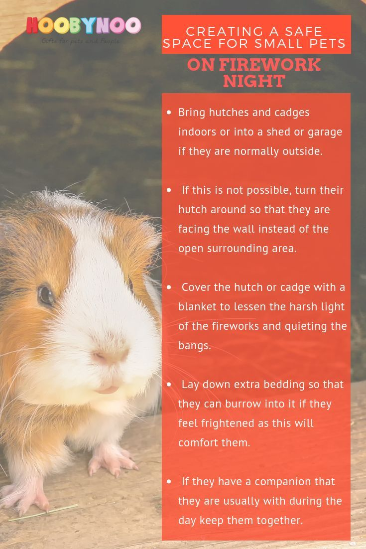 Top Tips For Pet Owners This Firework Night Guinea Pig Stuff