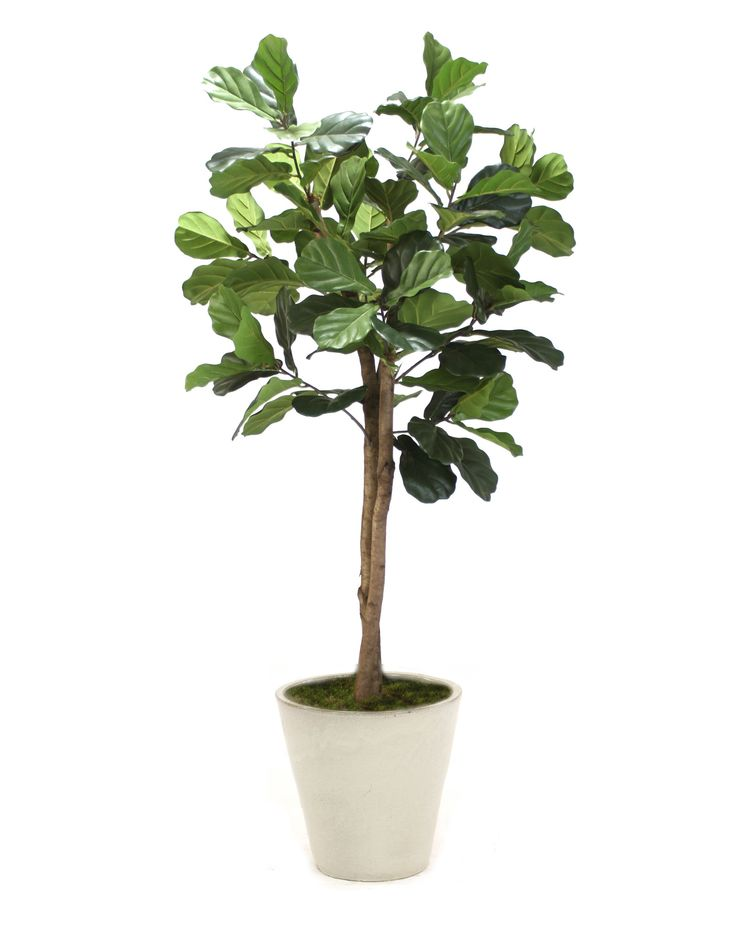 distinctive designs fiddle leaf tree in planter reviews