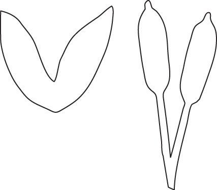 free printable coloring pages cattails plants   templates for spring theme black and white - Google Search ...
