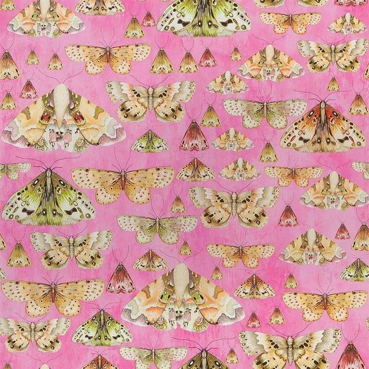Issoria Rose wallpaper by Designers Guild