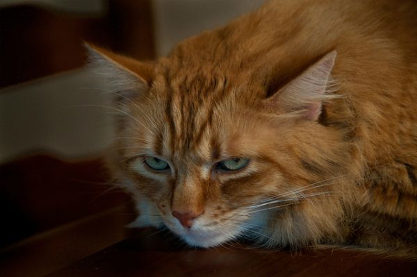 9 Possible Causes of Feline Weight Loss