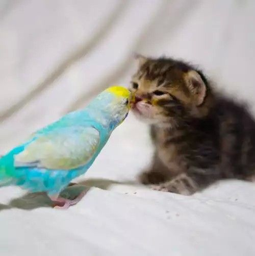 Polly meets Kitty.