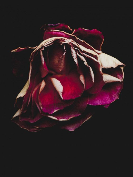 Billy Kidd – Beautiful Decay