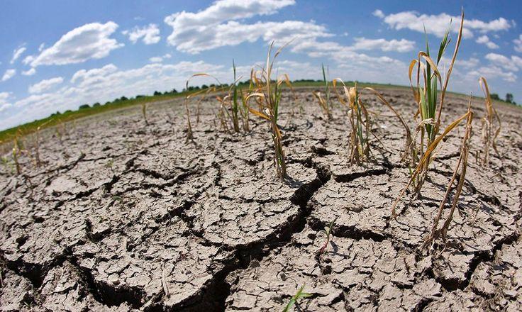 """Al menos 146 municipios hondureños son golpeados por la sequía. """"Travesuras"""" de El Niño tiene a Honduras al borde de la hambruna"""
