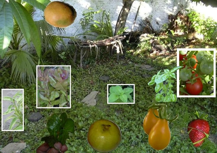 Hints for a Complete GOURMET GARDEN, on the cheap!