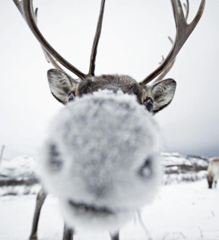 winter kiss :) ♥
