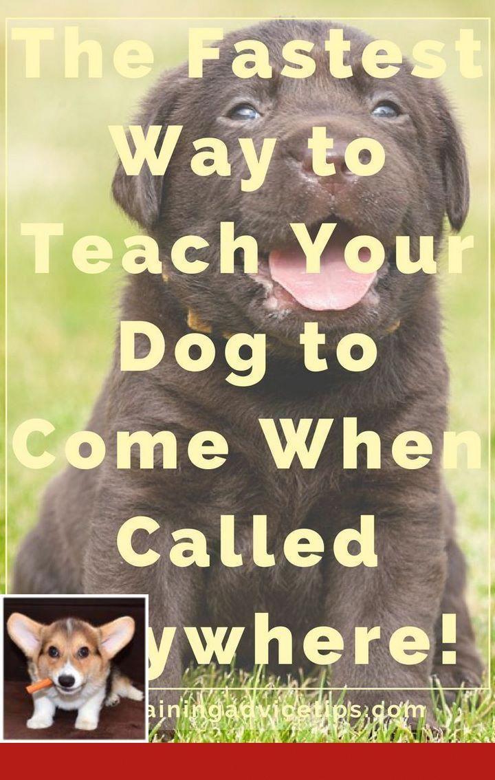 Potty Training English Bulldogs Dogtraining And Clickertraining