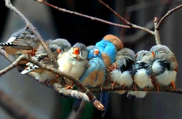 sweet little birds