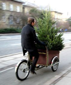 typical Dutch....bike transport for your Christmas tree