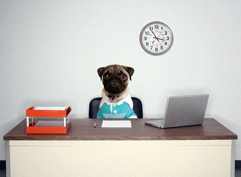 working pug. Checking to see Medicare covers it