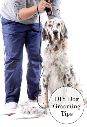Top 25 ideas about Pet Care Tips on Pinterest