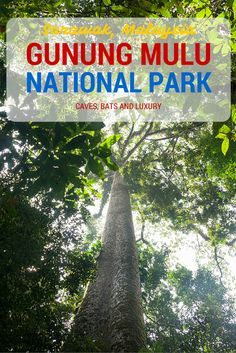 A guide to Gunung Mulu National Park in Sarawak, Malaysia, including caves, bats and a luxury stay in the Mulu Marriott!